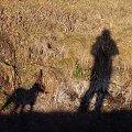 pies czuwa #pies #natura #cień
