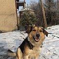 Pysiek - spacer, grudzień 2007 #pies #Pika #Pysio #kundelek #psy #psiak #spacer #śnieg