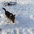 Pysiek - spacerki, grudzień 2007 #pies #Pika #Pysio #kundelek #psy #psiak #spacer #śnieg