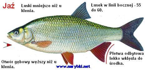 images32.fotosik.pl/141/4c259f32132b3048.jpg