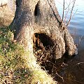 #drzewo