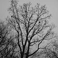Szare liście na szarych drzewach #Park #drzewo #ptaki #ponuro