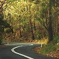 Zakręt, poza Sydney #droga #szosa #zakręt #drzewa