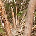 DrZeWkO #przyroda #drzewo #drewno #gałęzie #zieleń #flora