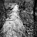 #bagno #drzewo #liście #natura