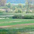 Warta, łąki, widok, krajobraz #Warta #widok #krajobraz