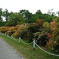 #zamek #moszna #azalia #rododendron #kwiat