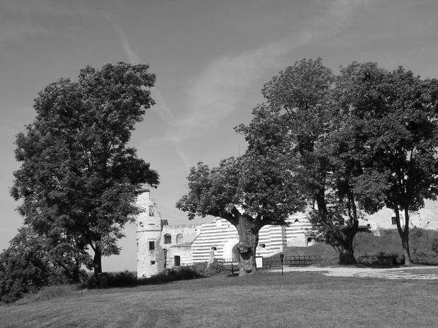 Ruiny zamku w Janowcu #zamek #drzewa #Janowiec #ruiny #wieża #zamczysko #ZamekWJanowcu #zamki