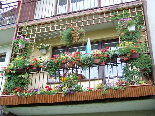 Trochę zmian w tym roku:-) #balkon #KwiatyBalkonowe #petunie #surfinie #koleusy