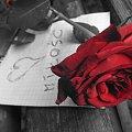 Czy miłość ma kolce? #Miłość #kwiat #róża #kolce #ból #cierpienie