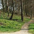 #ścieżka #drzewa #las