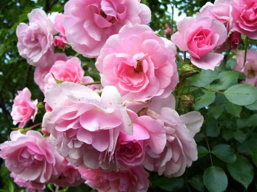 Bukiet #róże #kwiat #bukiet