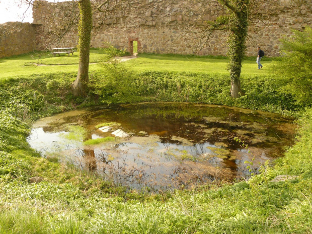 Bajorko #bornholm #dania #natura #staw #bajoro #jezioro