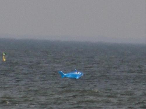 rekin w bałtyku -piaski