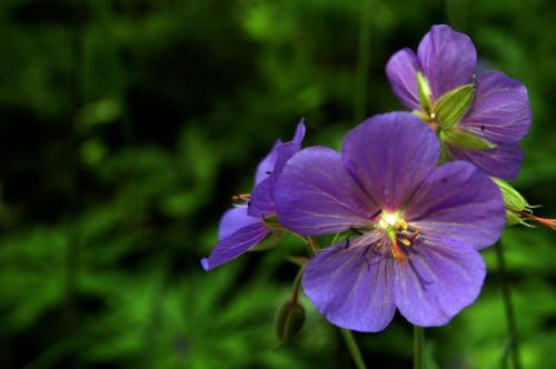 #łąka #kwiaty