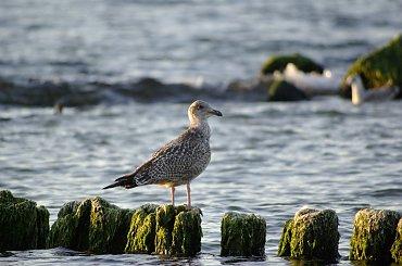 #morze #plaża #Bałtyk