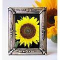 """""""słonecznikowy obrazek"""" #kwiaty #przyroda #obrazek"""