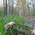 gdzie trawa zielona #Puszcza #jesień