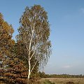 polna straż #Puszcza #jesień