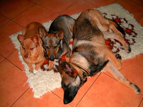 psia rodzinka w komplecie 2 #komplet #pieski #PsiaRodzina #psy #rodzinka