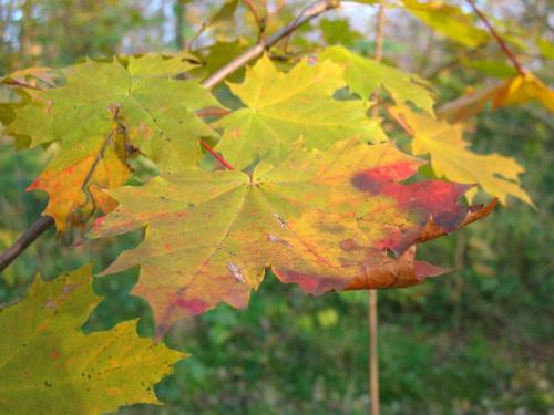 #jesień #listopad #natura