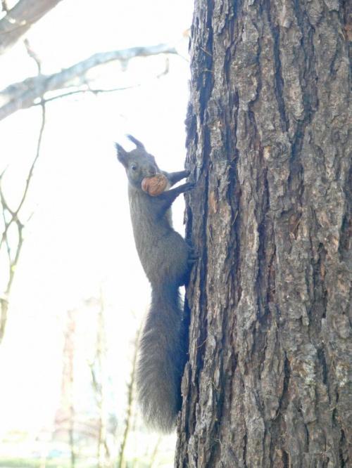 w ogóle śmieszna sytuacja z tą wiewióreczką- chciałam sfotografować duży obiekt, a przypadkiem trafiłam na wiewiórkę, która tępo(podobnie jak ja w nią xD) wpatrywała się we mnie z duuużym orzeszkiem w pyszczku :D