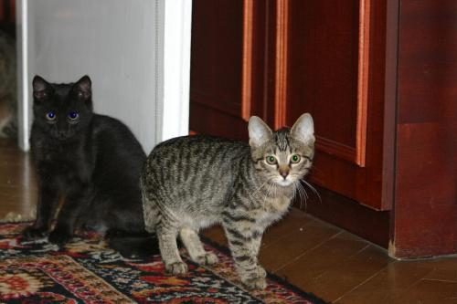 Igor i Duszek. Duszek jest u siostry