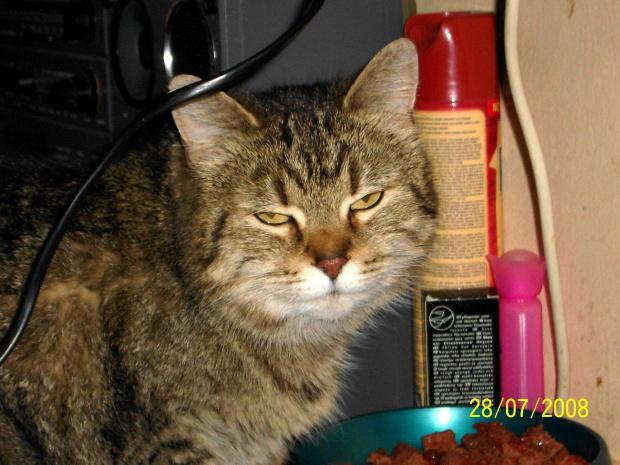 Tosia - rezyduje w pokoju Babci z Barikiem bo nie lubi konkurencji :)