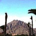 Egipt - Sharm el Shake #Egipt #wiatr #góry #palmy