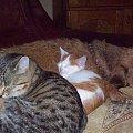 przyjaźń prawie niemożliwa #psy #pupile #koty #sen
