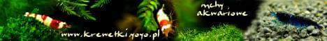 Krewetki kar�owate i mchy akwariowe