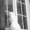 #podglądacz #bałwanek #zima