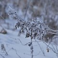 #zwierzęta #las #łąka #zima #róża #mróz #snieg