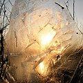 Cienki lód i słońce #lód #słóńce