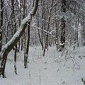 #zima #PuszczaBiałowieska