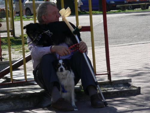 Psia renta #Ulica