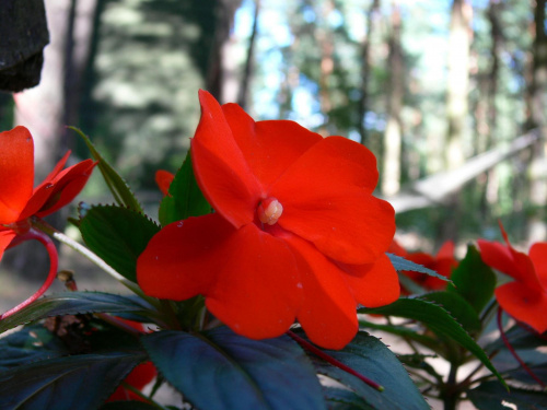 Nie wim jak się nazywa #kwiaty