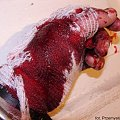 #ręka #ArtykułyMedyczne #krew #masakra